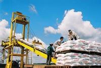 DPM: quý II là cao điểm vụ hè/thu, sản lượng tiêu thụ phân bón sẽ tăng lên 350 ngàn tấn