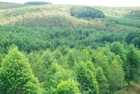 """""""Vẽ"""" dự án trồng rừng, lừa đảo chiếm đoạt 4,2 tỷ đồng"""