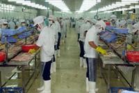 Gói 9.000 tỷ đồng : Chưa đủ để giải cứu ngành cá tra