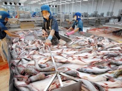 Bình quân mỗi ngày 'vua cá tra' lỗ ròng 9 tỷ đồng