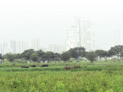 Điều chỉnh thu tiền thuê đất, thuê mặt nước