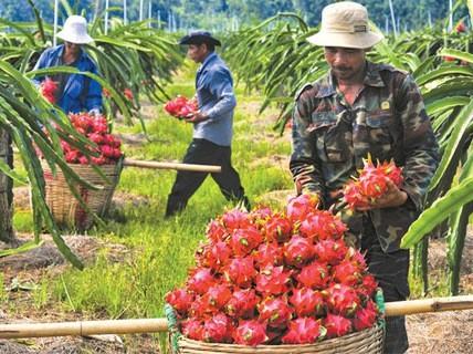Trái cây Việt chưa giành được lợi thế ở thị trường ngoại