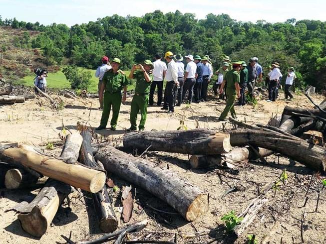 Bắt Giám đốc, chủ mưu vụ phá gần 61 ha rừng