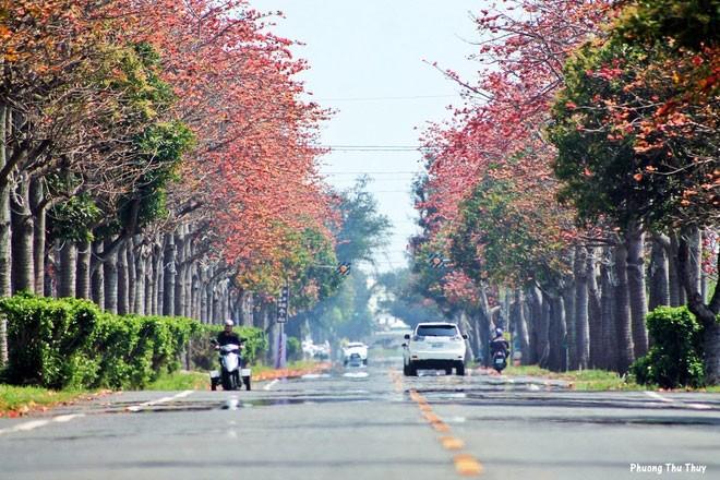 Con đường hoa gạo nở rực rỡ ở Đài Loan