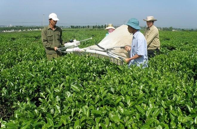 Đấu giá trọn lô hơn 2 triệu cổ phiếu Chè Lâm Đồng