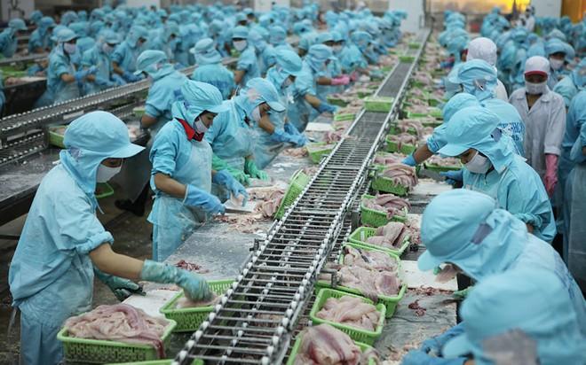 Doanh nghiệp cá tra: Cuộc đua vào thị trường 1,4 tỷ dân