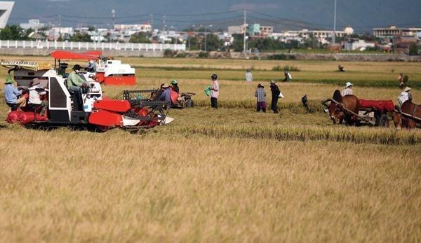 Xuất khẩu gạo sẽ sôi động trở lại