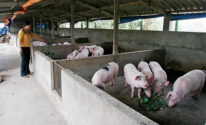 Doanh nghiệp chăn nuôi sẽ chịu nhiều thách thức từ TPP và AEC