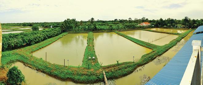 Chính sách tín dụng hướng tới tái cơ cấu ngành nông nghiệp