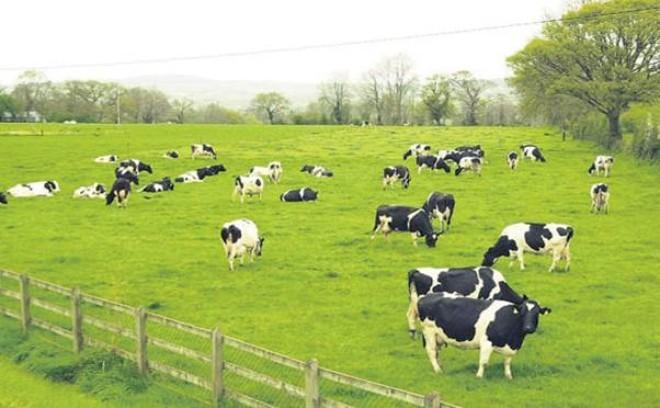 Bộ Nông nghiệp và Phát triển nông thôn thoái 37,59 % vốn khỏi Vilico
