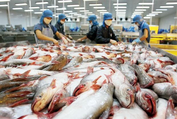 Xuất khẩu cá tra và cá basa có tiềm năng lớn