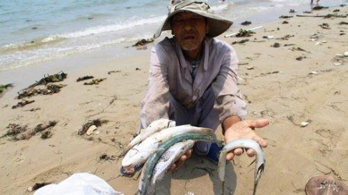 Quốc hội Đài Loan yêu cầu điều tra Formosa gây ô nhiễm biển ở Việt Nam
