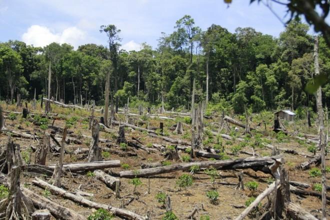 Thủ tướng yêu cầu làm rõ thông tin phá rừng trái phép tại Kon Tum