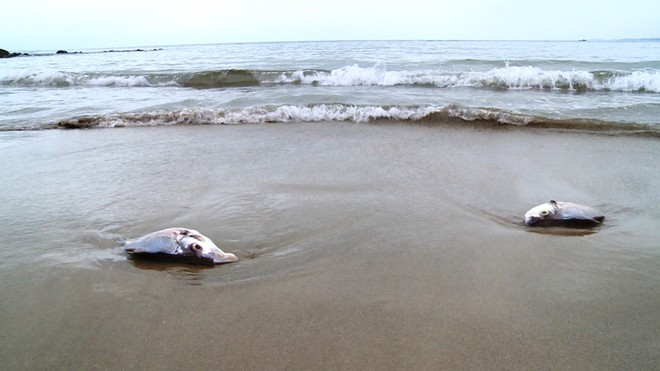 Bộ Tài nguyên và Môi trường là cơ quan giải quyết hậu quả sự cố hóa chất độc hại trên biển