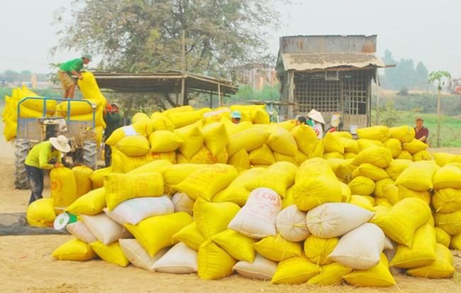 Giảm chỉ tiêu xuất khẩu gạo xuống còn 5,65 triệu tấn