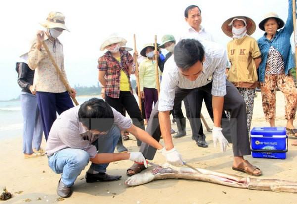 Chính phủ báo cáo về thiệt hại ban đầu do thảm họa Formosa