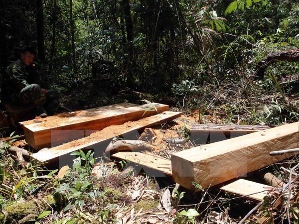 Thủ tướng yêu cầu báo cáo kết quả điều tra vụ phá rừng pơmu tại Quảng Nam