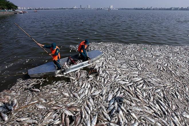 Thủ tướng yêu cầu khẩn trương làm rõ nguyên nhân cá chết bất thường ở Hồ Tây