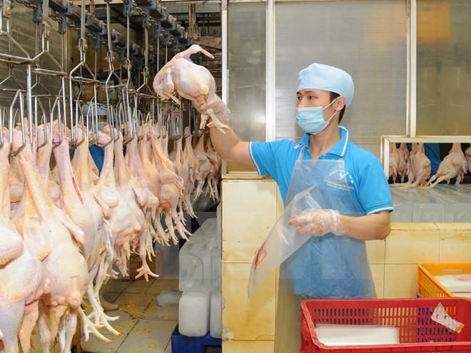 Việt Nam chuẩn bị xuất khẩu lô thịt gà đầu tiên sang Nhật Bản