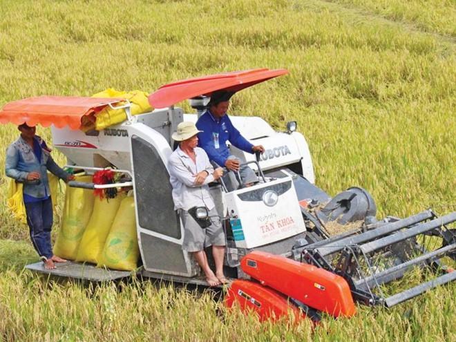 An ninh lương thực và thu nhập của người trồng lúa