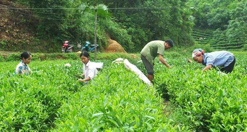 Thoái vốn, giải thể công ty nông, lâm nghiệp tỉnh Thái Nguyên