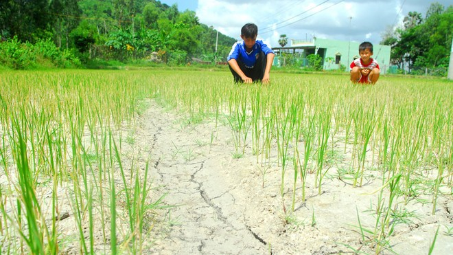 Nhật viện trợ 2,5 triệu USD khắc phục hậu quả hạn, mặn