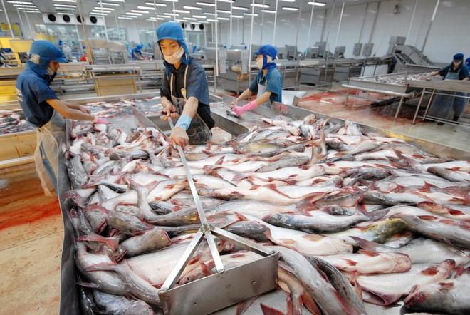 Bộ Nông nghiệp và Phát triển nông thôn thay đổi hẳn quan điểm về nghị định cá tra