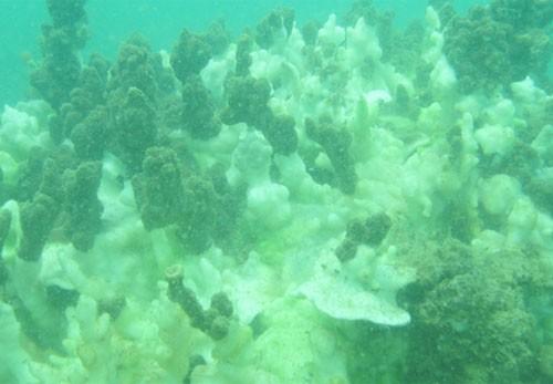 Hôm nay công bố chất lượng nước biển 4 tỉnh miền Trung