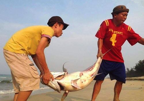 Biển miền Trung đảm bảo quy chuẩn để tắm, ăn cá biển có an toàn?