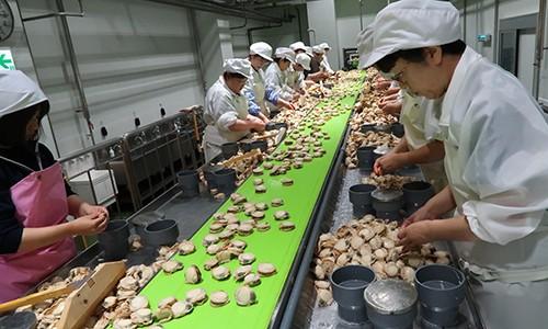 Ngôi làng giàu nhất Nhật Bản thiếu người làm