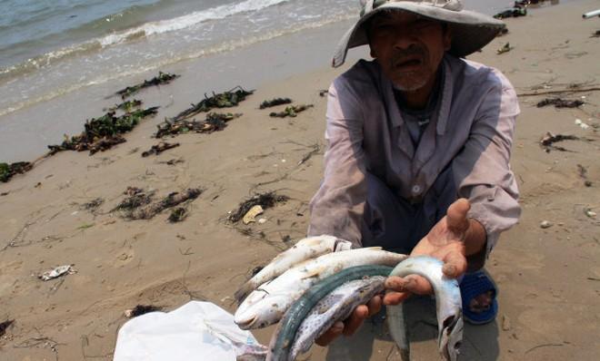 Các ngân hàng hỗ trợ khách hàng bị thiệt hại do cá chết bất thường ở miền Trung