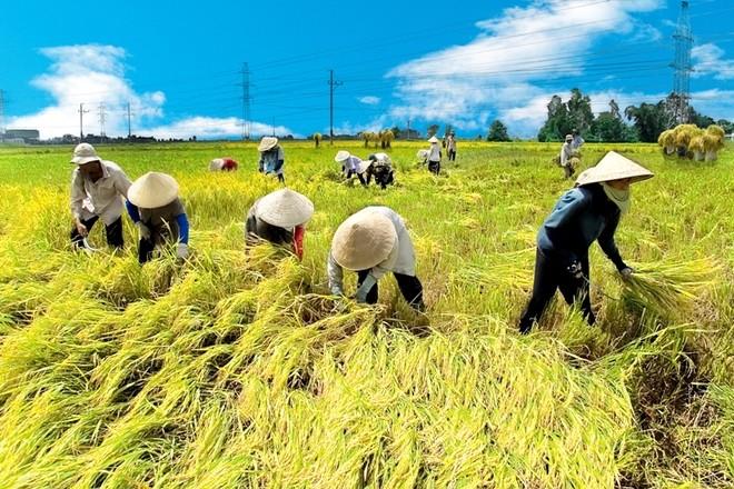 Cho vay nông nghiệp, nông thôn đã hấp dẫn nhiều ông lớn ngân hàng