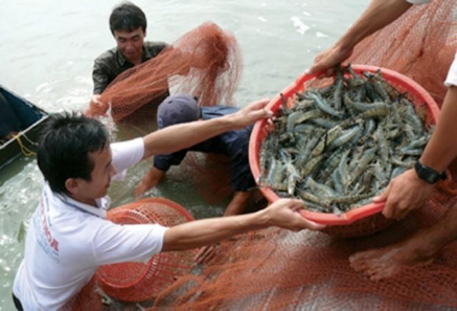 Trung Quốc gỡ bỏ lệnh tạm dừng nhập khẩu tôm sú sống từ Việt Nam