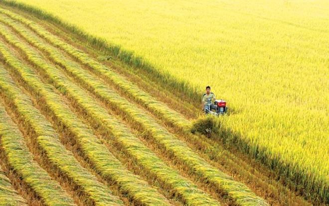 Đồng Nai chuyển đổi 93 héc-ta đất trồng lúa thực hiện dự án logistics