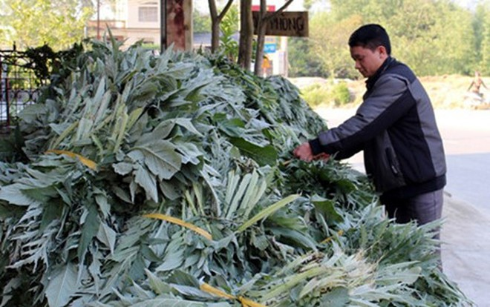 Thu gần 8 tỷ đồng mỗi năm từ trồng cây atiso