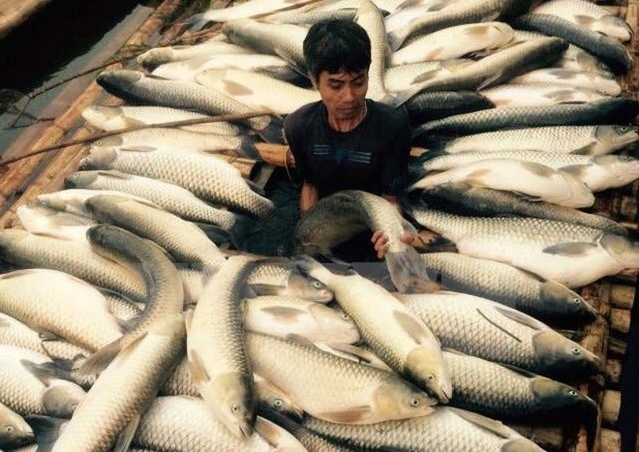 Mía đường Hòa bình bồi thường 1,4 tỷ đồng vụ cá chết trên sông Bưởi