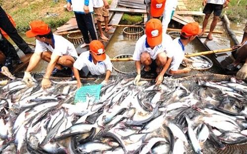 """Cấp phép """"khống"""" 800 sản phẩm thủy sản là sai phạm có tổ chức"""