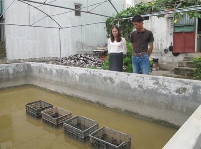 Nông dân Ninh Bình nuôi ngọc trai nước ngọt kiếm tiền tỷ mỗi năm