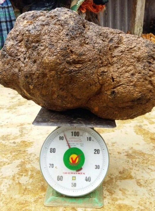 Đổ xô mua nấm u 1 triệu/kg: Thần dược chữa ung thư?