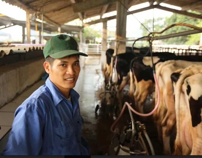 Thị trấn 600 tỷ phú, lái ôtô dạo thăm bò