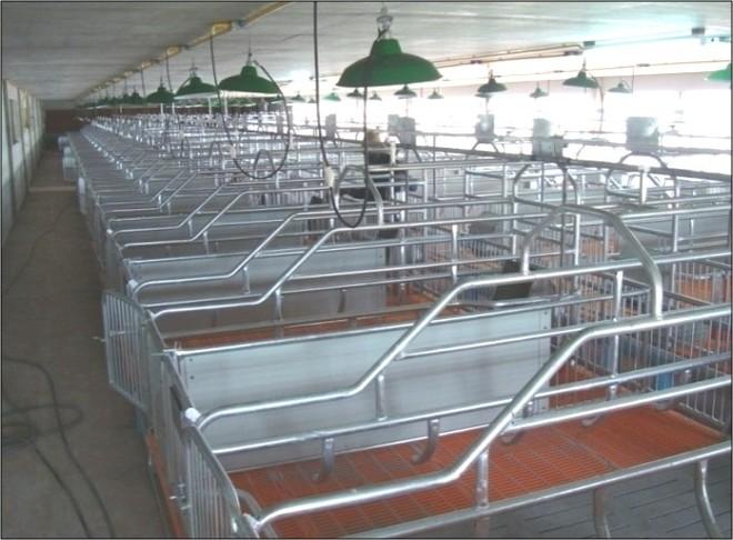 900.000 hộ treo chuồng, Bộ Nông nghiệp lại lo thiếu thịt heo