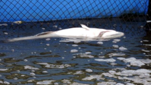 Dân nuôi cá Long Sơn thiệt hại 18 tỷ đồng, doanh nghiệp mới bồi thường… 21 triệu đồng