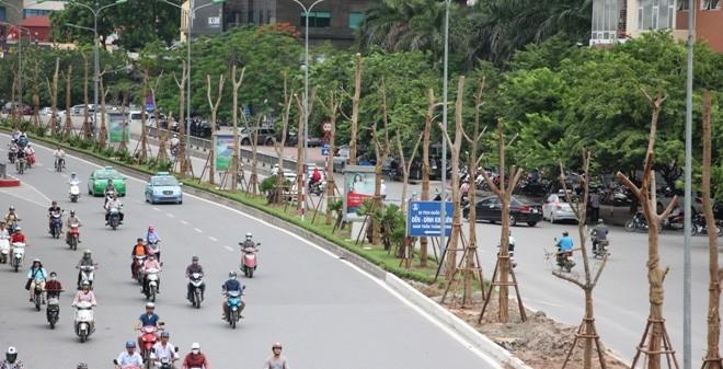 Phượng trồng mới ở Hà Nội ra hoa quanh năm, có cả màu đỏ, màu tím