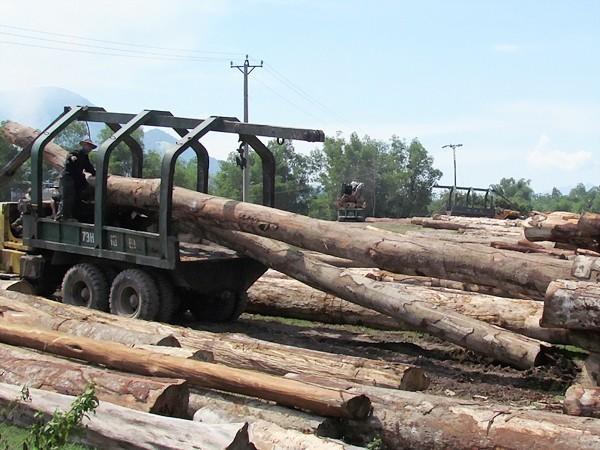 Nguồn nguyên liệu đạt chuẩn, thách thức lớn cho xuất khẩu gỗ